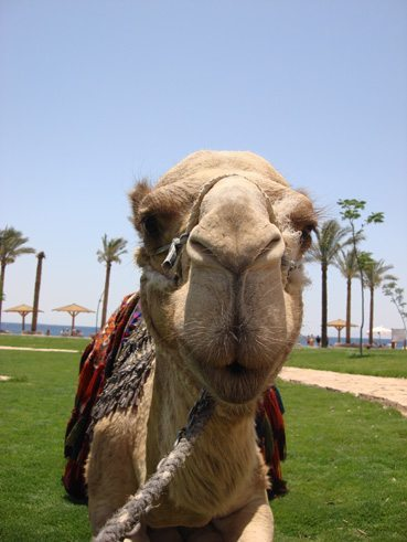 Doing your own PR could be the straw that breaks the camels back.